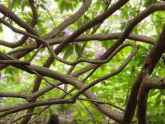 Rhododendrondalen Skövde
