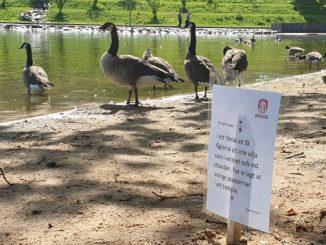 Fåglar i Boulognersjön i Skövde